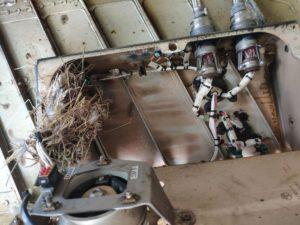 AC-bird-nest